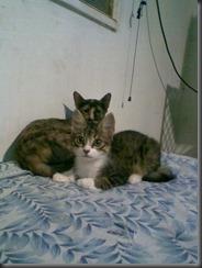 20090714-gatos-que-manipulan