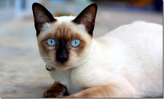 gatos_gato_curiosidades_cat_03