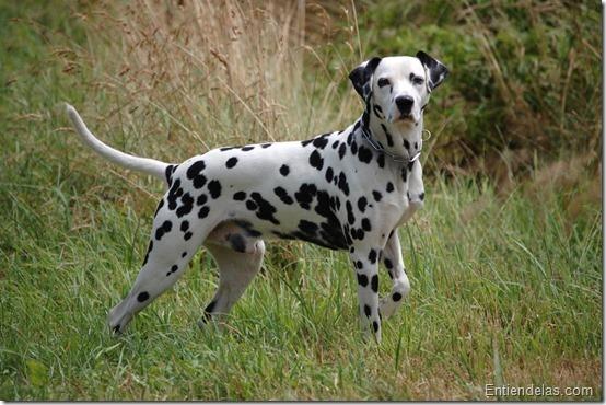 vivir con un perro hiperactivo 2