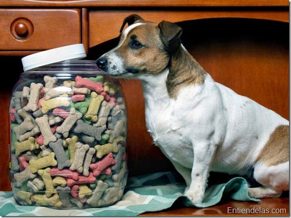 1123-galletas-para-perros-4ED