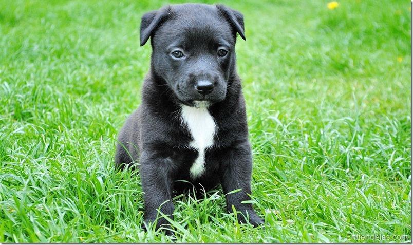 mascota-adopcion-perro